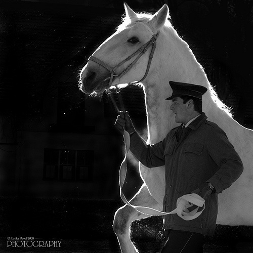 Oldkladruby White Horse by pavel conka, via Flickr