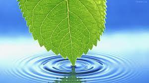 TIPO DE AGUA  La mejor agua para regarla es la de lluvia, que no contenga cal o cloro. La mejor agua es la de lluvia, pero, en su defecto, podemos dejar reposar.