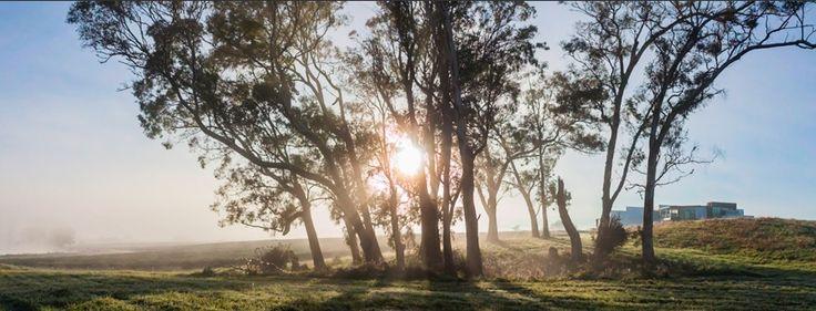 Rising sun at Zealong Tea Estate