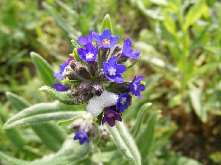 Image Wild Blue Flower, Spring