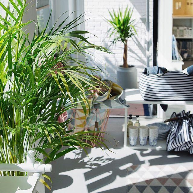 Instagram media by nordiskehjem - God morgen kjære følgere! De fantastiske sommervær fortsetter her i Stavern! 😎🙌🏻☀️ Trenger du en pause fra solen? Ta turen innom Nordiske Hjem. Vi er på plass i butikken fra kl 10 idag, bare å sving innom! Vi finnes også på webshoppen der det nå er SOMMARSALE! 🌿🔫☀️🌸www.nordiskehjem.no 👈🏻 #interiordesign #summer17 #stavern #sale#nordiskehjem #mittnordiskehjem #nettbutikk