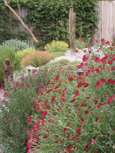 17 Best images about Xeric garden on Pinterest Manzanita
