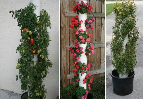 17 Best Images About Vertical Plantings On Pinterest
