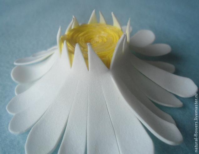 Сегодня я хотела бы показать, как сделать ромашки из фоамирана. Может, кому-нибудь поможет мой мастер-класс. 1. Нам понадобятся: фоамиран, клей, маслянная пастель, ножницы, циркуль, утюг. 2. Вырезаем заготовки из фоамирана. На одну ромашку нам понадобится 3 круга из белого фоамирана, диаметр 9 см, я использовала циркуль. И для серединки – полосочка желтого фоамирана длина 27 см ширина 2 см.