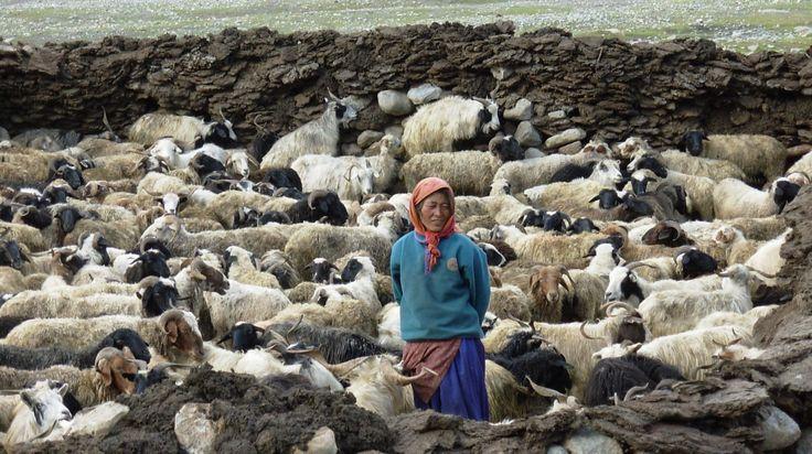 29 best ladakh permaculture trekking images on pinterest for Certified professional building designer