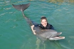 Swimming With Dolphins in Florida | Dolphin Encounters in the Florida Keys -This is at Hawks Cay Resort in the keys...