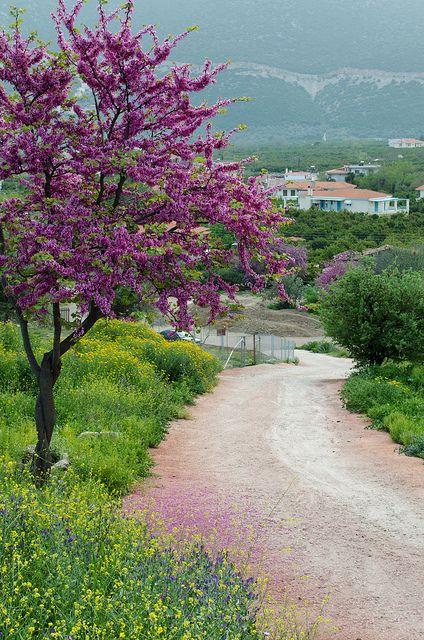 Spring Walk, Epidavros, Peloponnisos, #Greece