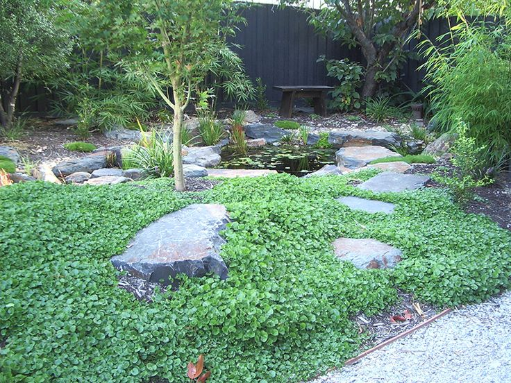 Dichondra lawn growing around stepping stones