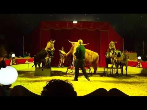 Osły, , Bawoły, Byki Afrykańskie..Circus Max Renz