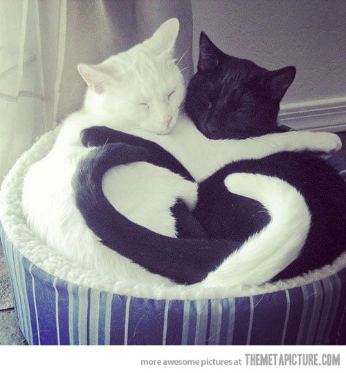 Ebony and Ivory, together in harmony