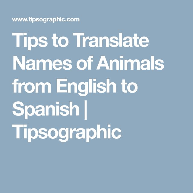 Tips to Translate Names of Animals from English to Spanish | Tipsographic
