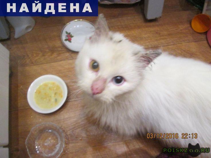 Найден кот белый с разноцветными глазами г.Оренбург