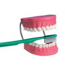 human teeth with toothbrush TH 001
