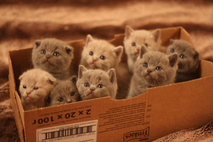 Ooooohhh, you said get the box of mittens? I grabbed the wrong box...