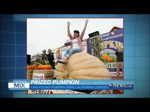 Debate Sensation Ken Bone's Sweater Sparks Social Media Buzz | ABC News - YouTube