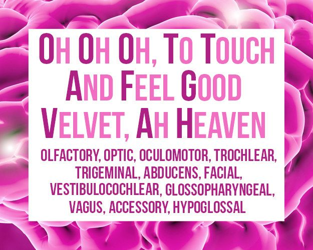 The order of the cranial nerves:   Mnemonic devices ...