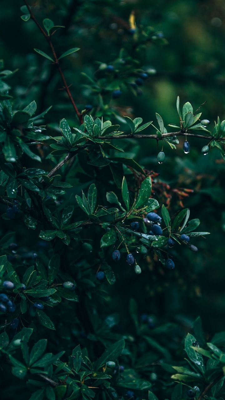 How To Combat Dry Skin In The Cooler Months In 2020 Blue Wallpaper Iphone Fruit Wallpaper Nature Wallpaper
