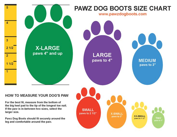 Looking for a dog boot that your pup will actually wear? Read our Pawz dog boots review to see why they are the only boot we trust in the Winter and Summer!