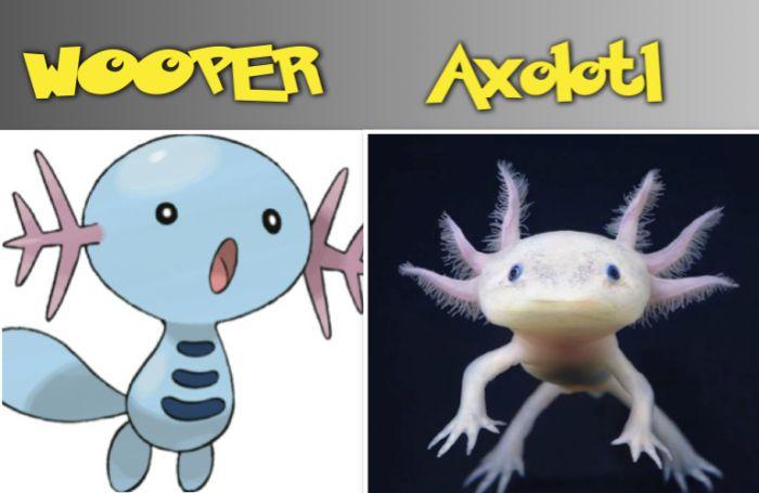 WOOPER Axolotl