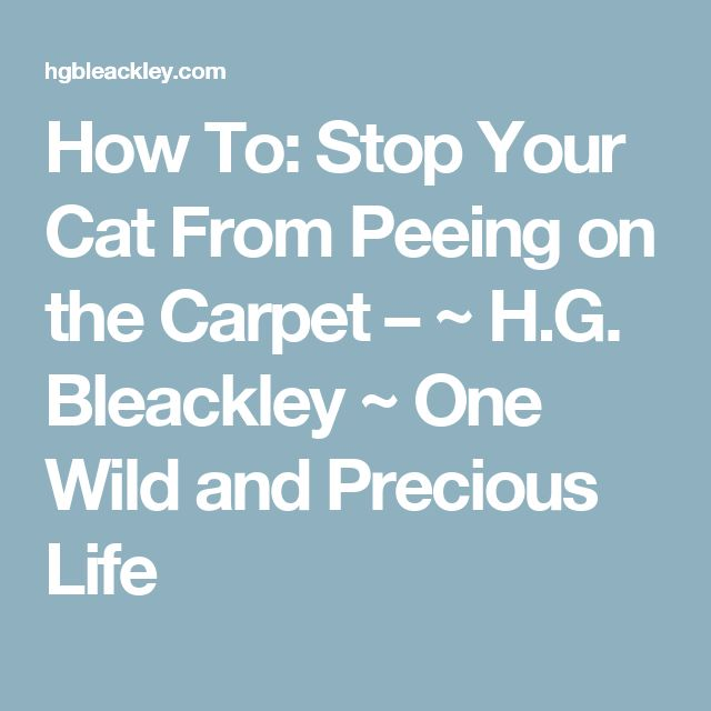 auto cat litter cleaner