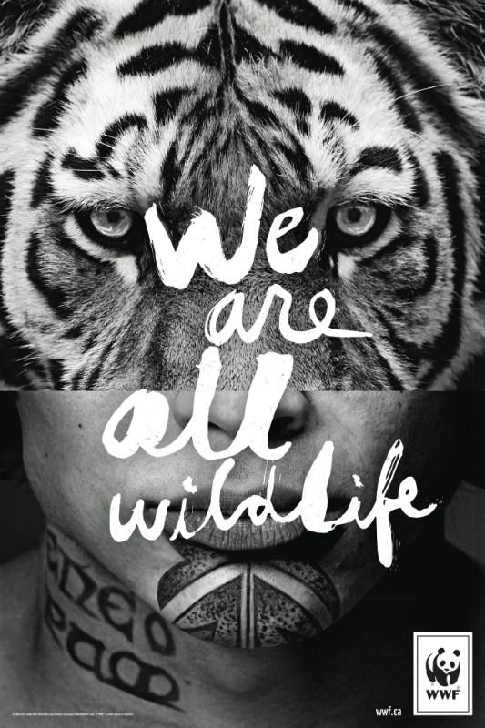 Image result for creative wildlife campaign poster