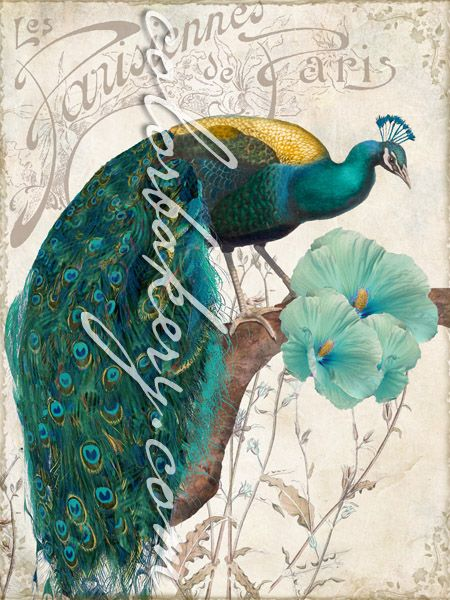 vintage peacocks in antique, vintage art nouveau styling straight to you from old Paris.