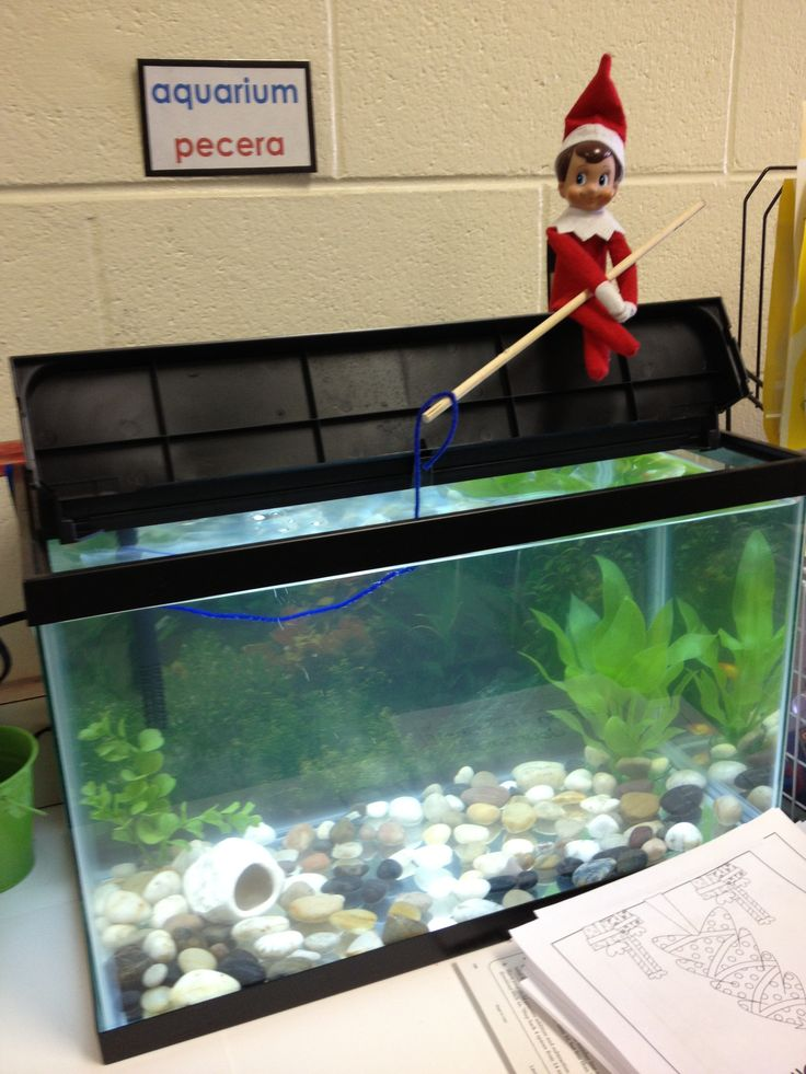Classroom Elf Ideas ~ Best images about elf on a shelf pinterest lunch