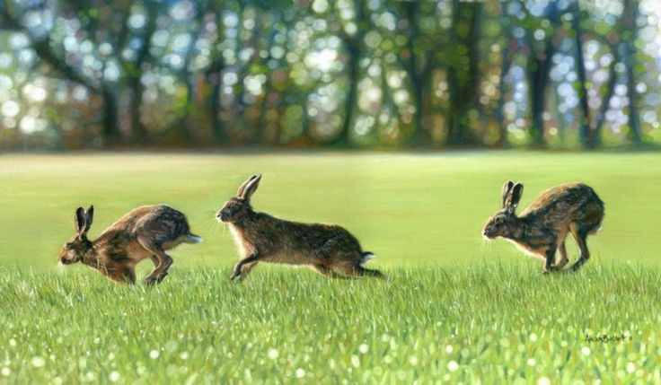 Hop, Skip & Jump by Alison Burchert winner of The Artist Exhibition Award