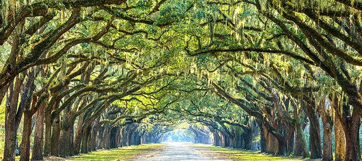 Historical Sites & Plantations near Myrtle Beach