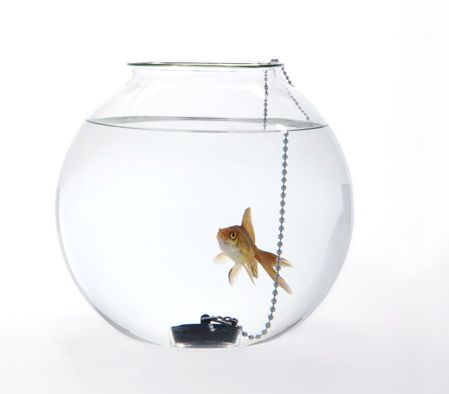 """Fish bowl which """"tells us about the power to decide between the life and death of the fish"""""""