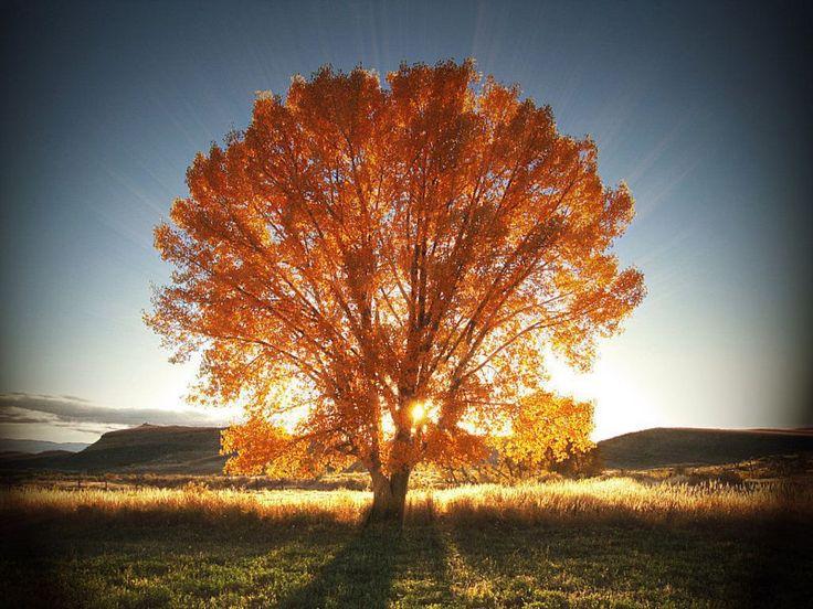 continue reading http://earth66.com/autumn/autumn-splendor-audra-lamoreaux/