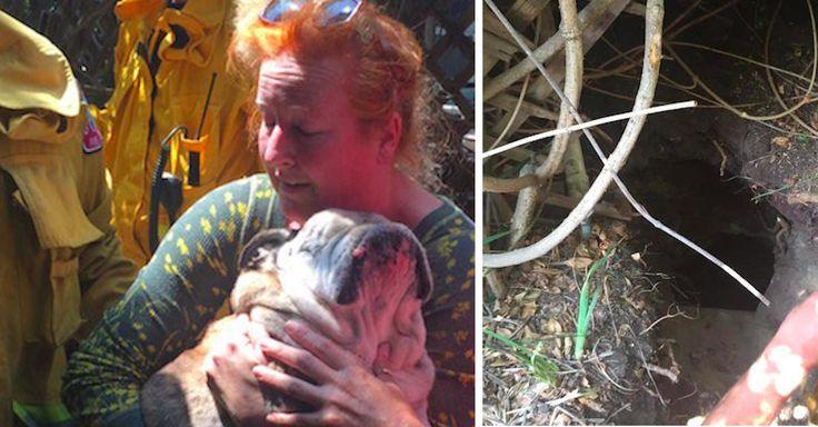 Un chien aveugle est retouvé dans un trou caché de son jardin, après que la voisine l'ai aperçu dedans.