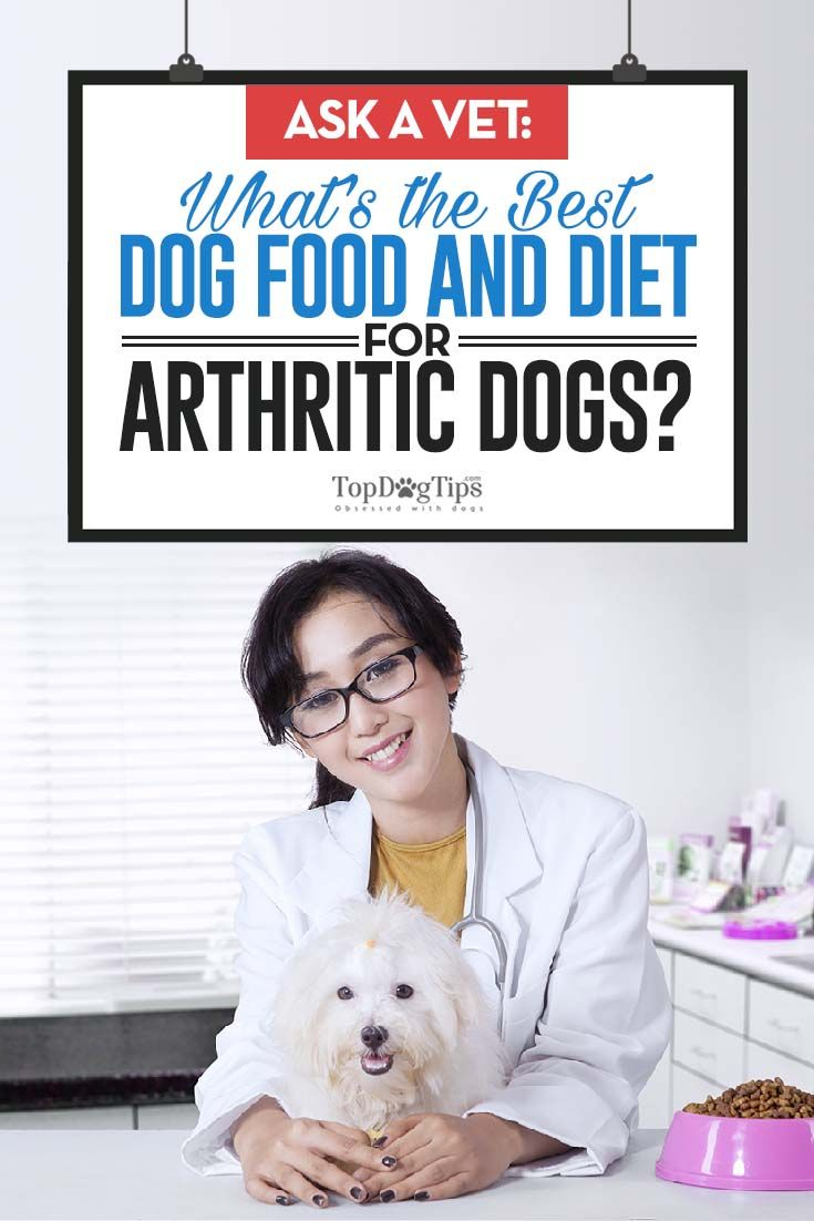 Ask A Vet What S The Best Food For Arthritic Dogs Best Dog