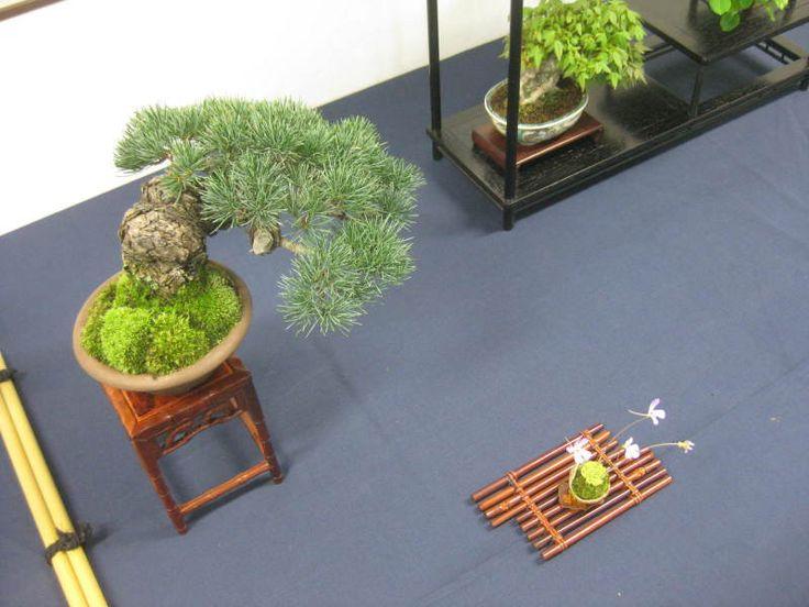 862 best Chawan images on Pinterest   Ceramic art, Bonsai and Porcelain