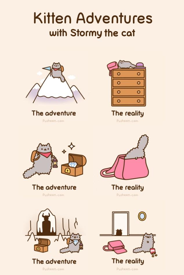 Pusheen The Cat Pinterest Cats Ojays
