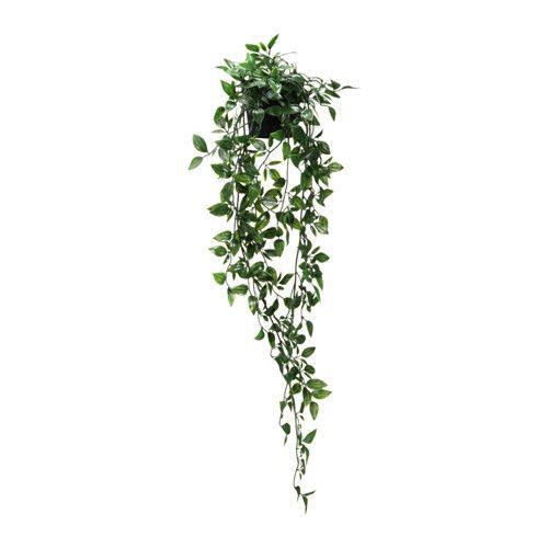 Les 25 meilleures id es de la cat gorie plante for Plante artificielle exterieur ikea