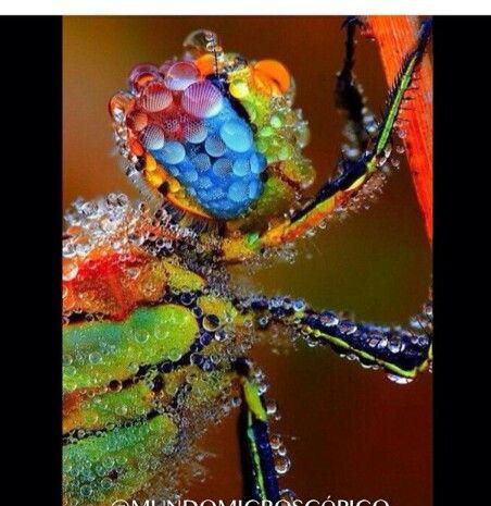 Libélula cubierta de gotas de lluvia.. ;)