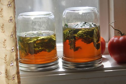 herbal honey as a medicine. add garlic and sage directly to the honey, and let sit for 2 weeks. a wonderful, healing medicine that soothed throats and calmed coughs for kids - and it wasn't a hassle to have them take it!Add Garlic, Preserves Herbs, Calm Cough, For Kids, Sore Throat, Herbal Honey, Healing Medicine, Sage Direction, Soothing Throat