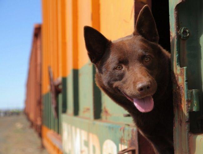 Рыжий пёс.  Такое кино как кислород— хочется жить наполную катушку, любить ибыть лучше.