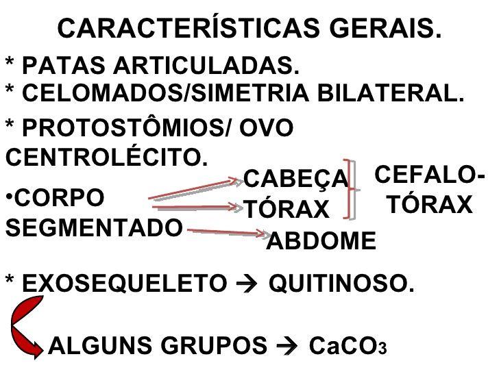 CARACTERÍSTICAS GERAIS. * PATAS ARTICULADAS. * CELOMADOS/SIMETRIA BILATERAL. * PROTOSTÔMIOS/ OVO CENTROLÉCITO. <ul><li>COR...