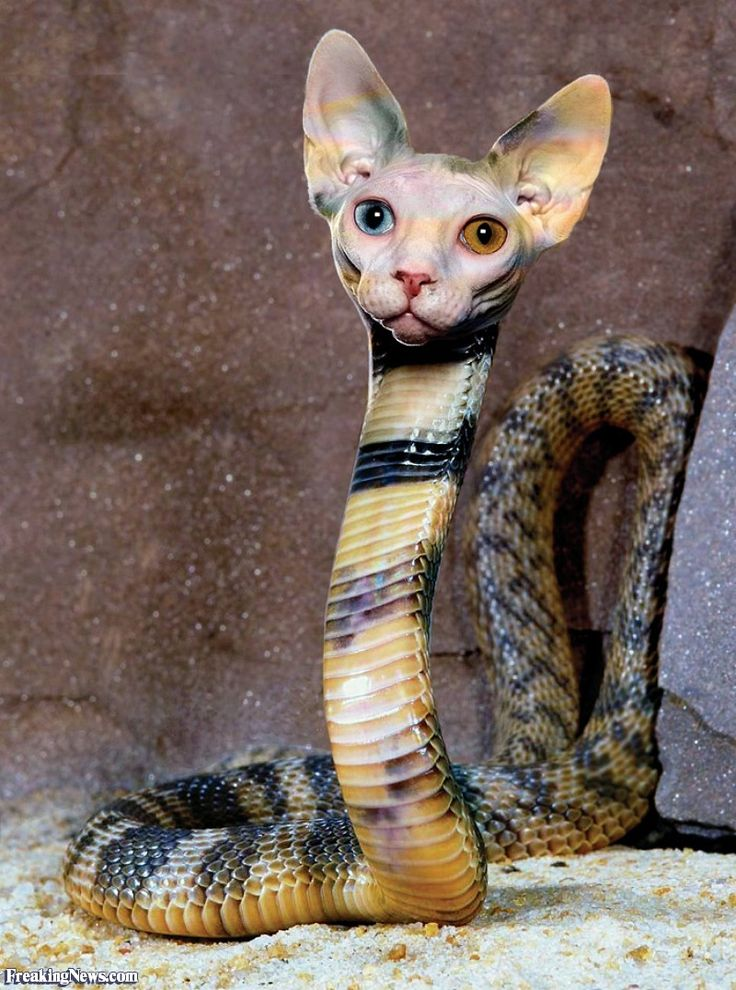 Cat Snake [picture] | Photo-manipulations at Best ...