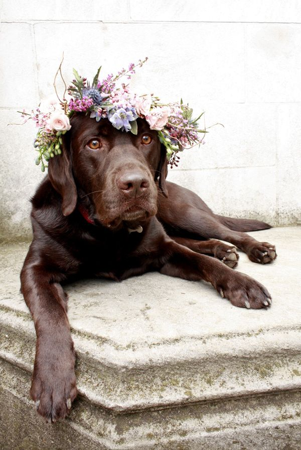 Wear. Wag. Repeat.   Flower Crown for Dogs   http://wearwagrepeat.com
