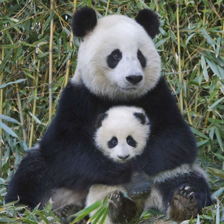 11 Too-Cute Photos of Animal Moms and Their Babies