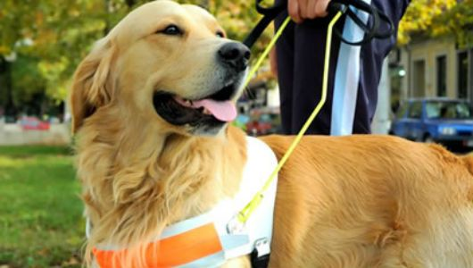 Dementia dogs are specially trained to help Alzheimer's patients remember the details of their day.