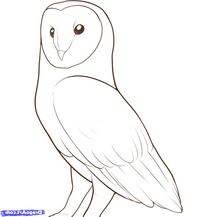 The 25 Best Owl Drawing Easy Ideas On Pinterest Owl
