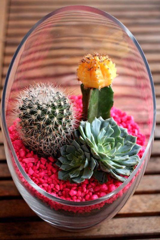 флорариум пустыня с цветными камнями