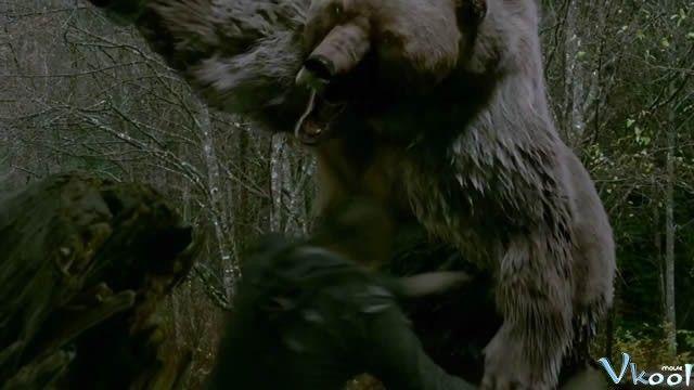 Lạc Vào Mê Lộ Gấu Hung ác: