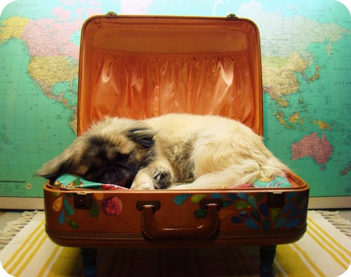 sick addictions - puppy in my luggage