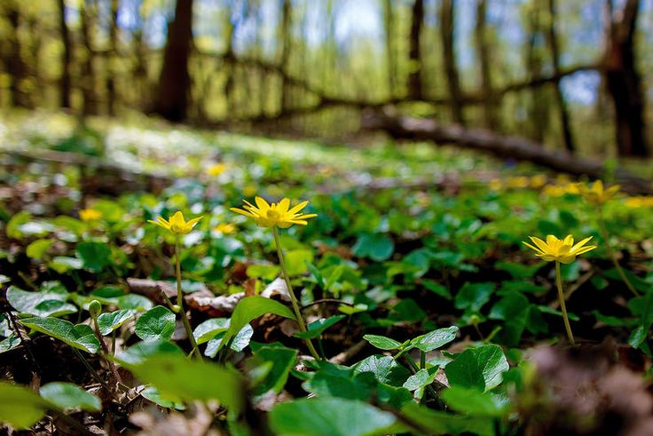 Törékeny szépség...Long-erdő természetvédelmi terület,Sárospatak környékén...