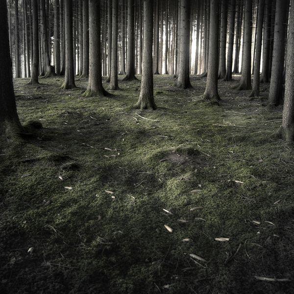 Very MysticalJürgen Heckel, Forests Fashion, Damian Valle, Jurgen Heckel, Beautiful, Dark Forests, Nature Photography, Forests Photography, Mystic Forests